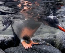 Фото дня: Антарктика