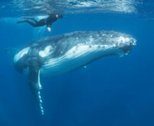 19 февраля – День защиты морских млекопитающих