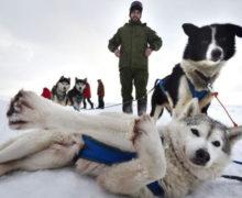 Стартовала экспедиция на собачьих упряжках по Онежскому полуострову