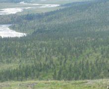 Из-за потепления Россия может потерять тундру и рыбные богатства Арктики