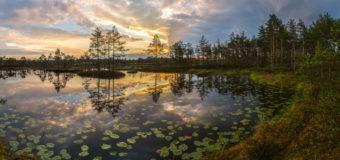 2 февраля – Всемирный день водно-болотных угодий