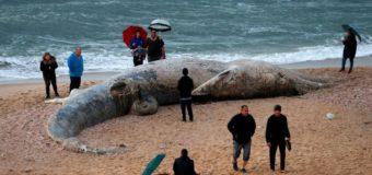 Десятки тонн мазута изуродовали средиземноморский берег