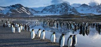 В Думу внесли законопроект об учреждении Дня открытия Антарктиды 28 января