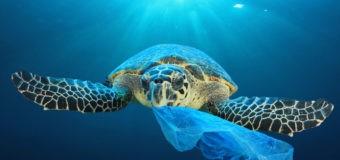 """""""Мировой океан: микропластик"""" – новый проект на OCEAN-TV"""