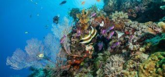 Власти Австралии оспорят заявление ЮНЕСКО о бедственном положении Большого Барьерного рифа