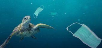 Полтора миллиарда одноразовых масок попало в океан в 2020 году